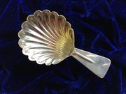 Shell Shaped Caddy Spoon
