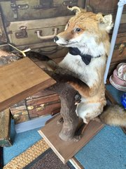 Vintage Taxidermy Fox
