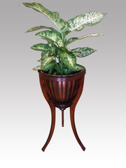 Edwardian Mahogany Planter