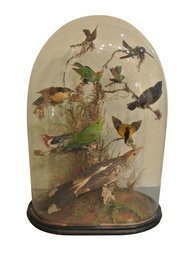 19th Century Collection Of Tropical Birds