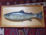 "RARE wooden trout plaque c1910  25"" l"