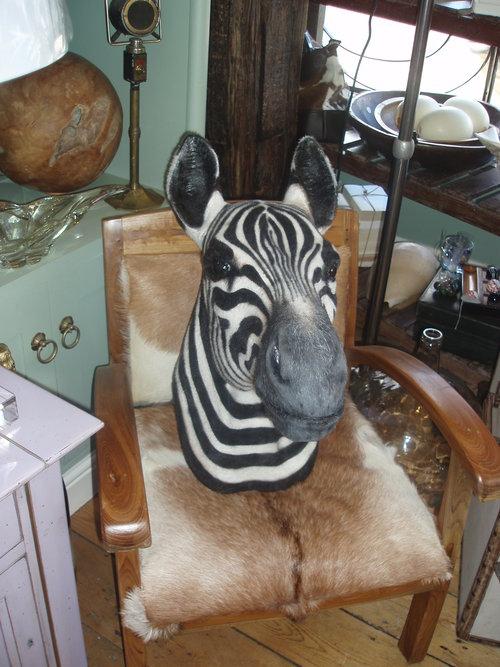 Faux zebra taxidermy mount