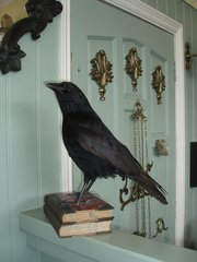 Taxidermy crow mounted on books