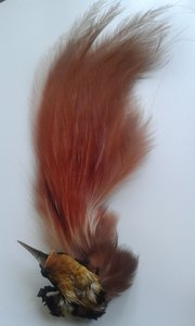 Vintage Bird of Paradise feather plume