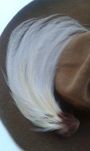 Yellow/cream bird of Paradise Feather