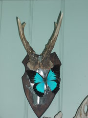 blue butterfly on horns and skull