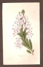 James Andrews Botanical Hand C