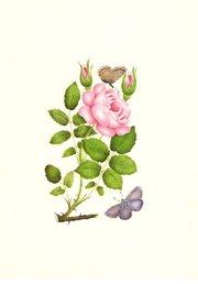 Very Fine Watercolour  circa 1